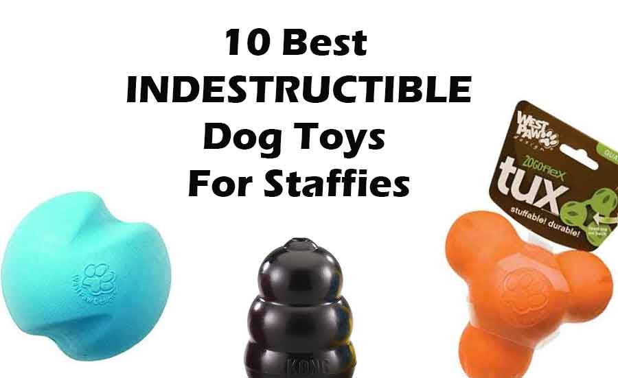 Indestructible Dog Toys For Staffies